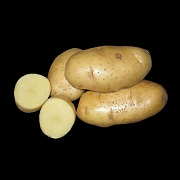 Элитный семенной картофель от производителя