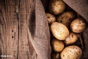 Качественный продовольственный картофель