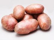 Чистый семенной картофель